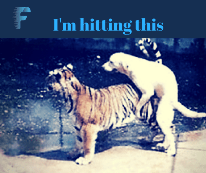 I love to fuck tigers