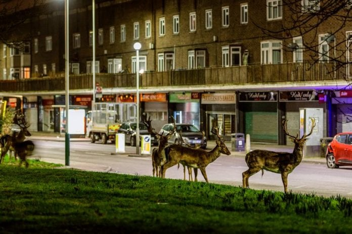 Deer spotted in London