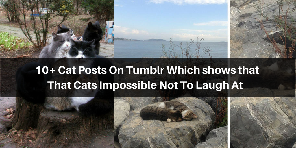 These Cat Posts On Tumblr Which Shows That That Cats - 20 cat posts on tumblr that are impossible not to laugh at